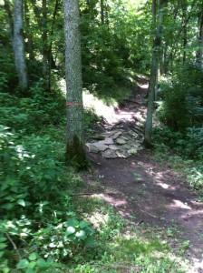 LAC Trails 1